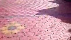 Hexagon Interlock Pavers Grip On Tiles Thrissur