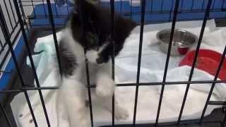 Что делать с бездомным котенком(В ветеринарную клинику Лаки опять подкинули бездомного котенка! Их сейчас так много бегает по нашим улицам...., 2015-07-10T22:02:26.000Z)