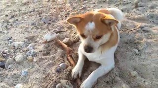 ПОРОДА ДВОРНЯШКА | САМАЯ КРАСИВАЯ ПОРОДА СОБАК 🍅 The most beautiful dog in the world