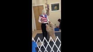 Freestyle Canine Dance At Progressive Animal Wellness (paw) Of Avon, Ct