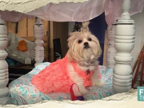 How to Make Princess Dog Bed - Fix This Full Episode May 27, 2016