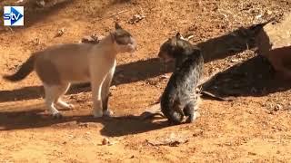 Funny Animal Fights Compilation - Animals Vs Animals - Funny Animal Videos....