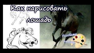 Как нарисовать лошадь(подробное обучающее видео)