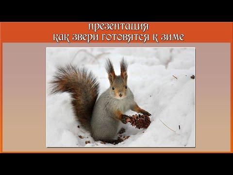Презентация как звери готовятся к зиме