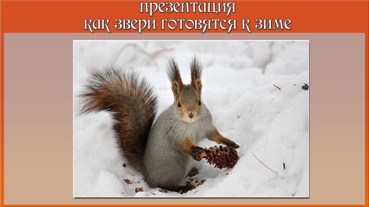 Как готовятся звери к зиме