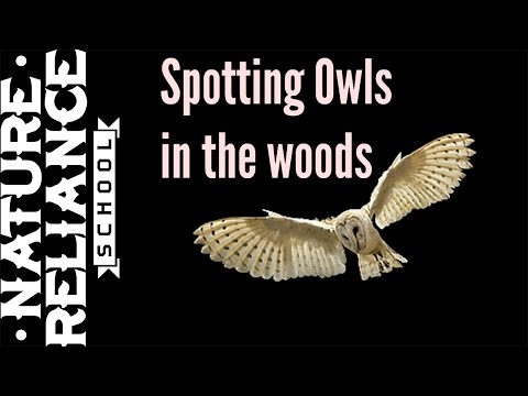 Quicktip on how to see more owls in the woods