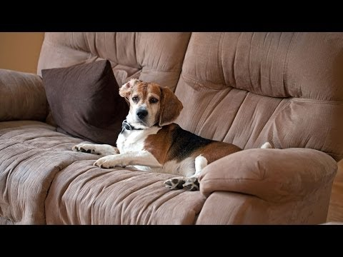 How to Keep Your Puppy Off Furniture | Puppy Care