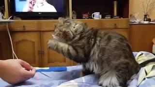 Кот наркоман
