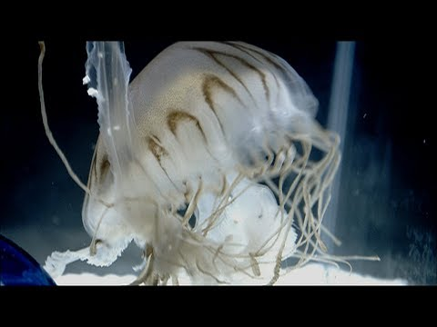 THE BACK HORN「未来」MUSIC VIDEO