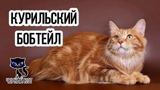 Курильский бобтейл / Интересные факты о кошках