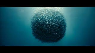 Océans Океаны (2009)   Прокофьев - Танец рыцарей
