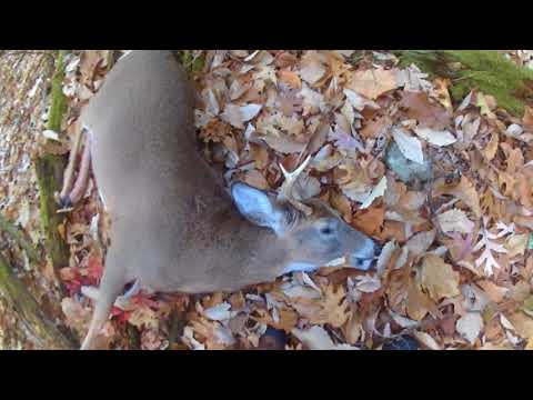 Deer Hunting Rifle Season 2017: 4 DEER IN 4 DAYS!
