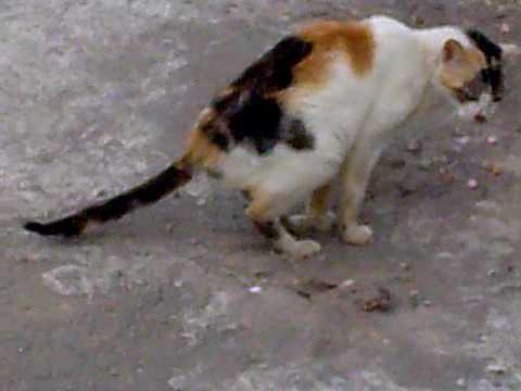 Kucing Mencret Cat Diarrhea Youtube