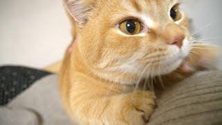 ママによじ登ってくる甘えん坊猫が可愛い!