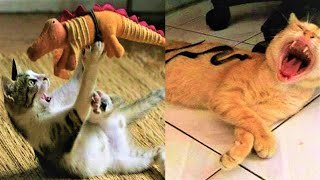Dogs And Cats Reaction To Toy 😂 Funny Dog & Cat Toy Reaction Compilation #50
