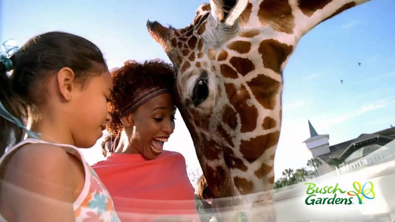 Busch Gardens Tampa Bay Promo Video YouTube