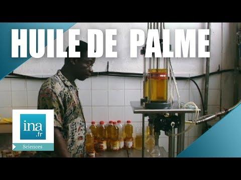 Fabrication de l'huile de palme à Iracoubo   Archive INA