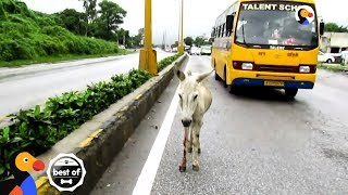 Animals Trapped In Traffic Get Saved By Brave People | The Dodo