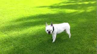 coco bulldog pratteln thumbnail