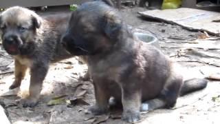 Самый грустный и трогательный клип про животных