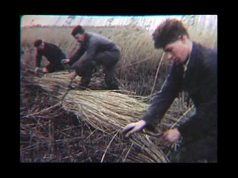 The Films of Ernest Kleinberg:  The Netherlands: Struggle for Land
