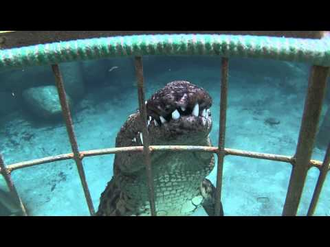 Crocodile Cage Dive, South Africa