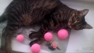 Если кот хочет спать... Никак не разбудить. Вязаные мячики для котят. Домик рукоделия Лизы