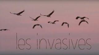 Oumbi - Les invasives (chanson nuisible)