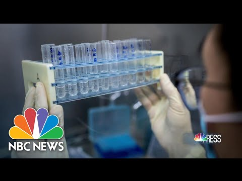 Vaccine Tests Should Have Results By 'Early June': Oxford Professor | Meet The Press | NBC News
