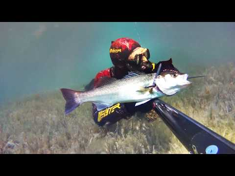 Spearfishing Greece ~ # τα τελευταία ρηχά του Απρίλη #