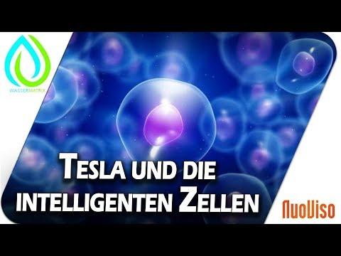 Testla und die intelligenten Zellen - im Gespräch mit Mathias Kampschulte und Arthur Tränkle