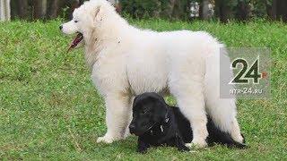 В Нижнекамске у собаководов микрорайона №7 появилась своя площадка для выгула животных