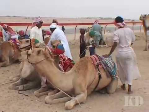 Верблюжье одеяло купить в