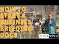 Pet Care - How to Start a Business Breeding Dogs - Bhola Shola