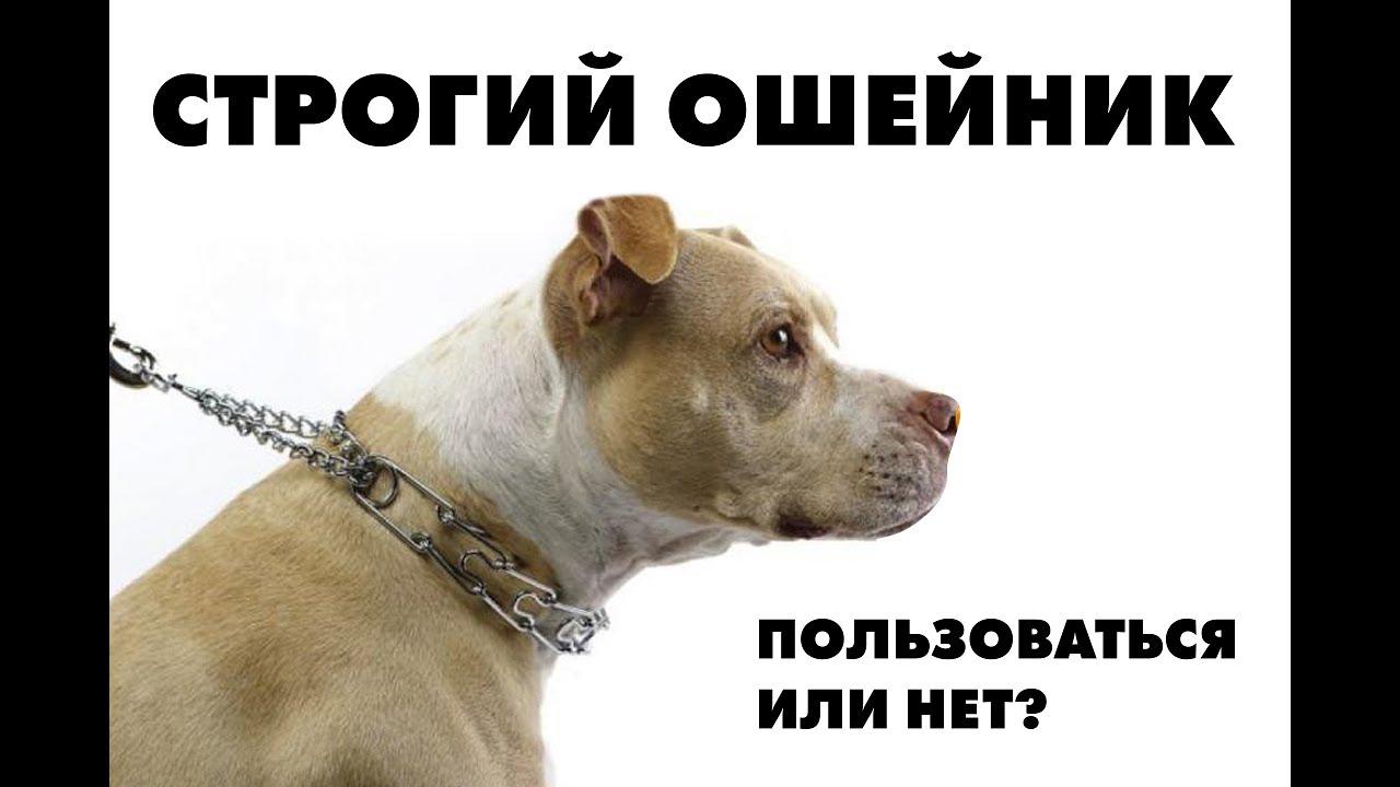 Качественные намордники для собак!. Купить намордник для собаки можно в нашем интернет магазине по низкой цене!. Доставка по минску и беларуси!