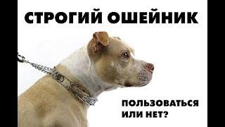 Строгий ошейник для собаки. Когда он нужен?