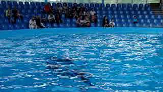 Дельфинарий - 4(, 2014-05-28T20:24:42.000Z)