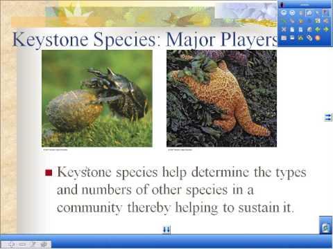 Terrestrial Ecology 1