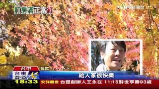 獨家 追楓 福壽山農場假日湧3500人 訂無房