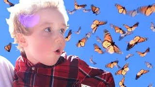 Birthday Party w/ a THOUSAND live BUTTERFLIES!