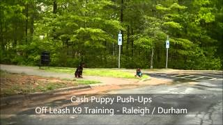 "9mo Rottweiler ""cash"" Before And After Video - Raleigh Durham Dog Training"