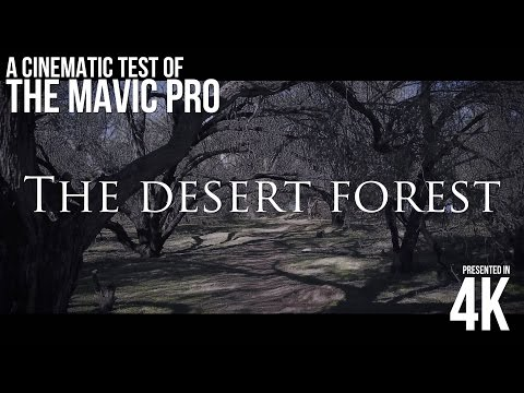 The Desert Forest   UNLEASHING the POWER of the Mavic Pro Finally