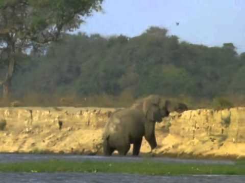 BBC Natural World 1998  Vanishing Pools of the Zambezi