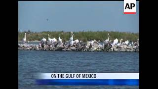 Fears that Gulf of Mexico wildlife could be devastated by the BP oil spill have, so far, proved unfo