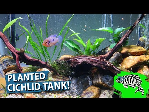 Planting the Jewel Cichlid Tank!!  Hemichromis Moanda