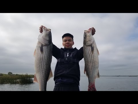 Nonstop Spring Striper Action || California Delta
