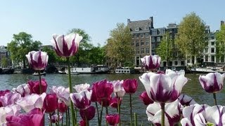 Video Best Time to Visit Amsterdam | Amsterdam Travel download MP3, 3GP, MP4, WEBM, AVI, FLV Januari 2018