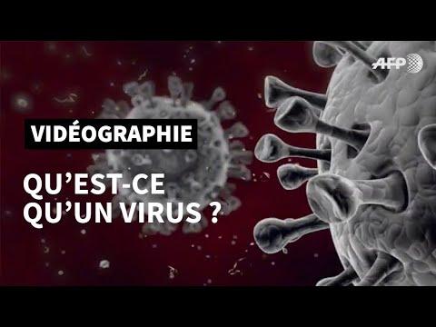 Download Qu'est-ce qu'un virus?   AFP
