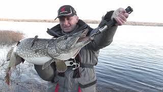 Щуки Монстры Белорусских озер Ловля трофейной щуки январь 2020 Щука на 12 5 кг на спиннинг