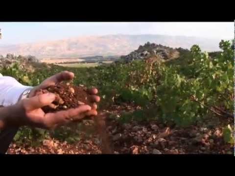 Chateau Kefraya - Libanesische Weine - weinstore24.de